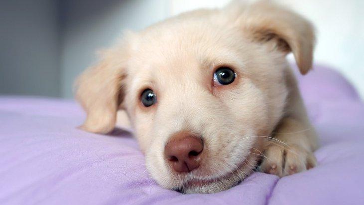 保護犬を飼う時に絶対しなければならない3つのこと