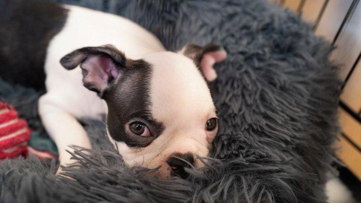犬が『ふかふかした場所』を好む4つの理由