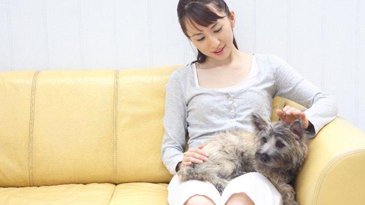 『犬が嫌いな音』5選!その理由やストレスを与えないためのコツ