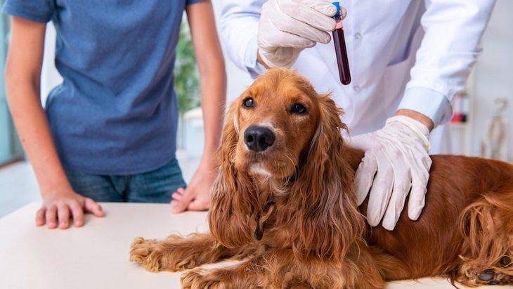 犬の炎症性腸疾患(IBD)の診断が早く簡単にできる新しい血液検査