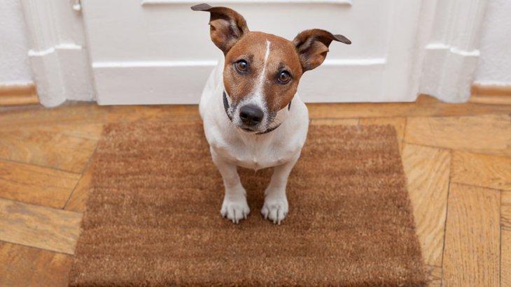 解明されていない犬の知識5選