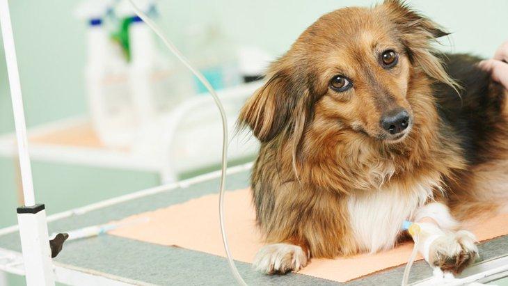 犬の年齢ごとに注意したい下痢の原因