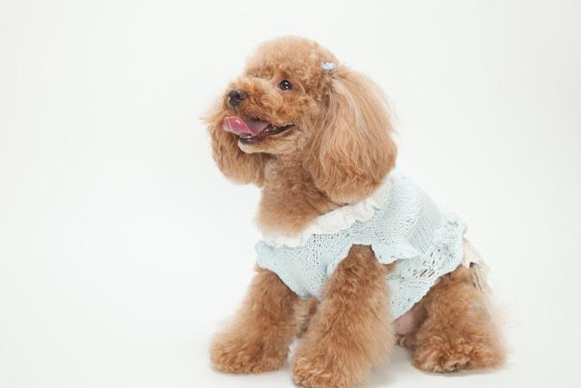 自分に合う犬種を選ぶ方法と覚えておきたいこと