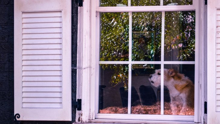犬が『窓の外に向かって吠える』5つの心理!やめさせる方法は?