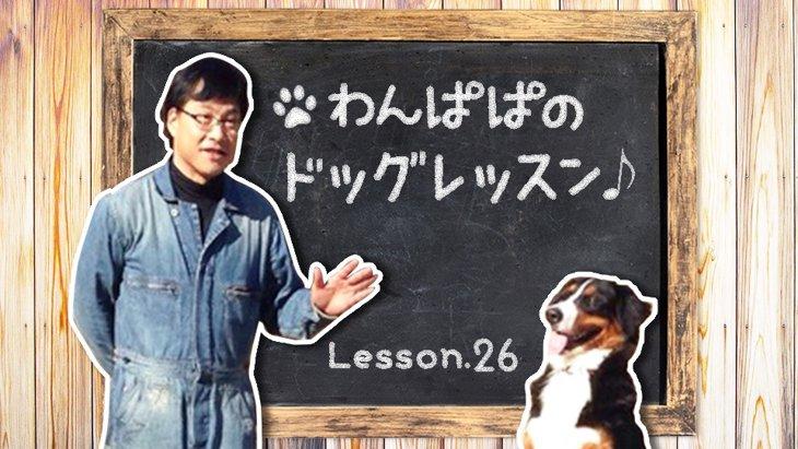 わんぱぱのドッグレッスン♪Lesson26〜で、保護犬はぁの巻2〜