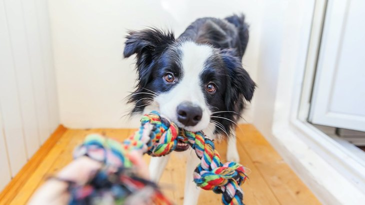 犬のしつけは何分くらいするのがベスト?やりすぎるとどんな悪影響がある?