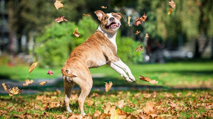 犬がジャンプをくり返す時の心理3選!やらせすぎると怪我に発展することも…?