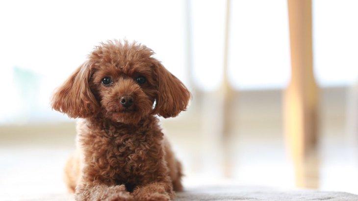 デレデレ♡甘えん坊な子が多い犬種5選