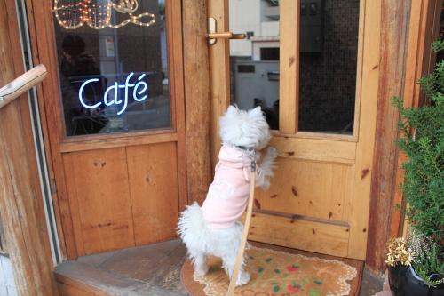 「補助犬啓蒙活動会場で起こった補助犬拒否」私たちができる事はありますか?