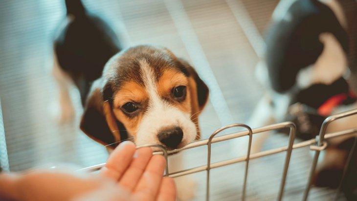 犬に「おいで」というと逃げられる理由3つ