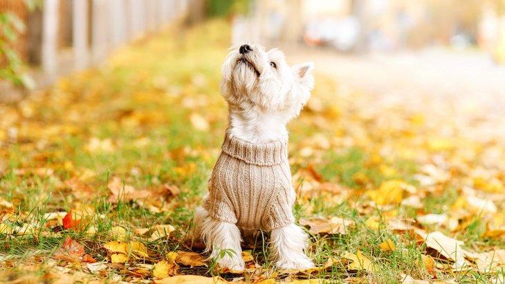 犬が服を着るのを嫌がっている時の仕草7つ