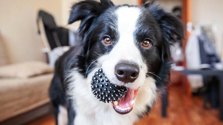 犬がよくする『一人遊び』4選