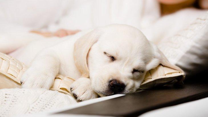 犬が一緒に寝たがるときの心理5つ