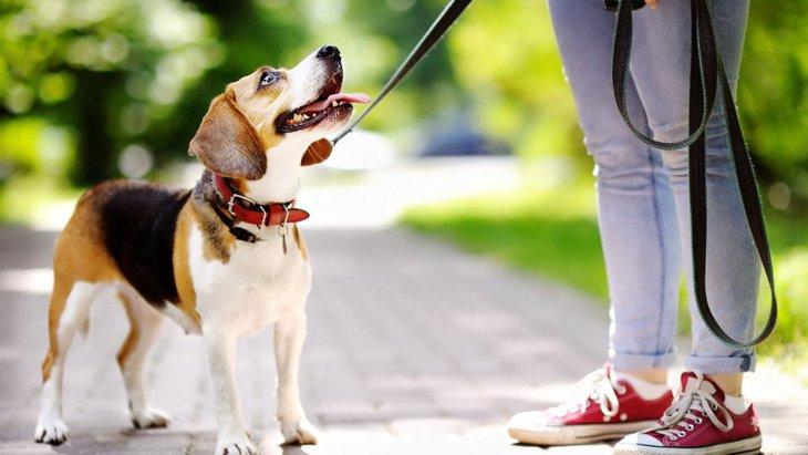 犬は写真を見て飼い主を判別できる?