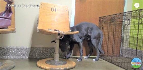 人への恐怖が強い犬を保護。たくさんの愛情で見違える姿に!