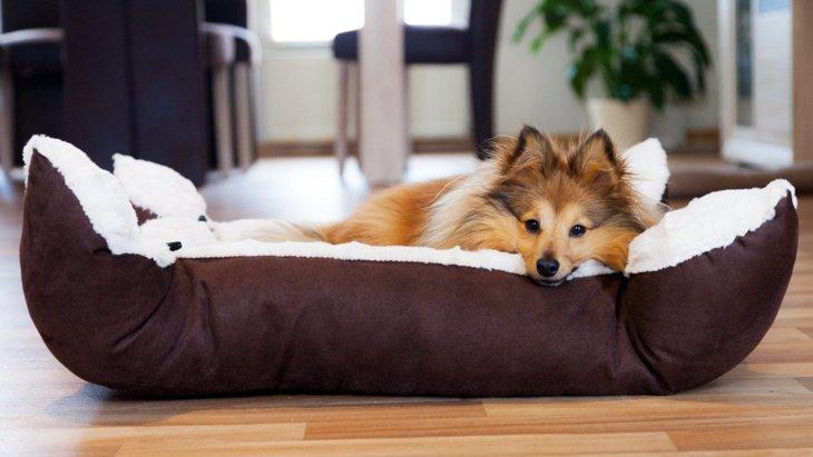 犬にとって理想的な『睡眠時間』はどのくらい?寝不足になっている時の症状は?