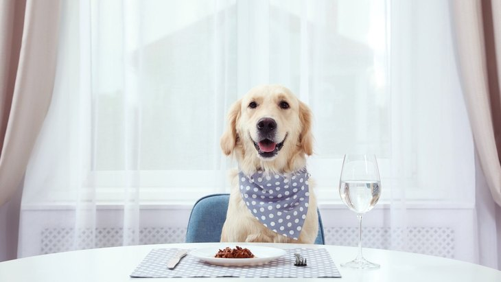 犬は『飼い主の真似』をする!?やりがちな5つの行動