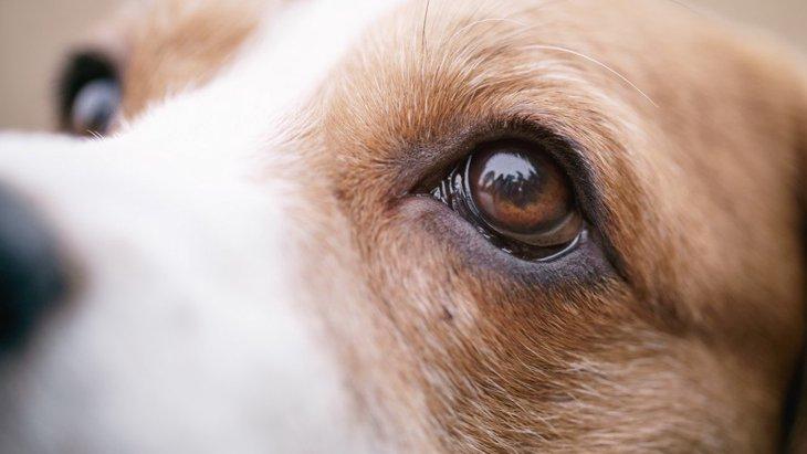 犬は人をよく見てる!犬が真似する人の仕草や行動5選