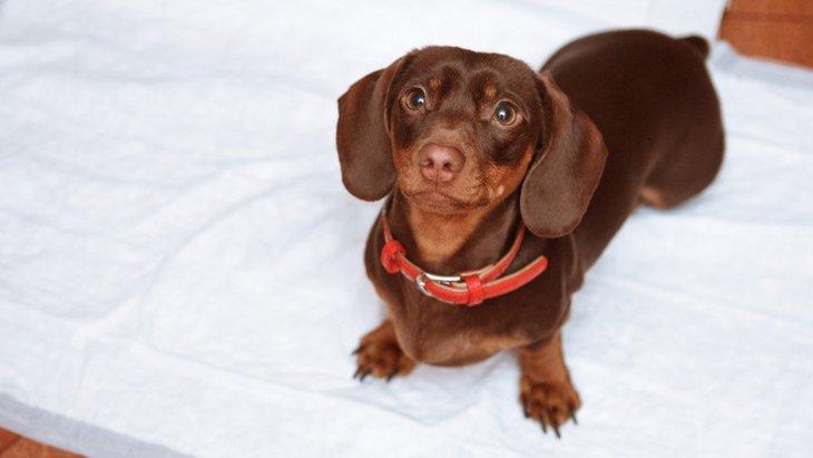 犬がウンチだけトイレ以外でする原因と対処法