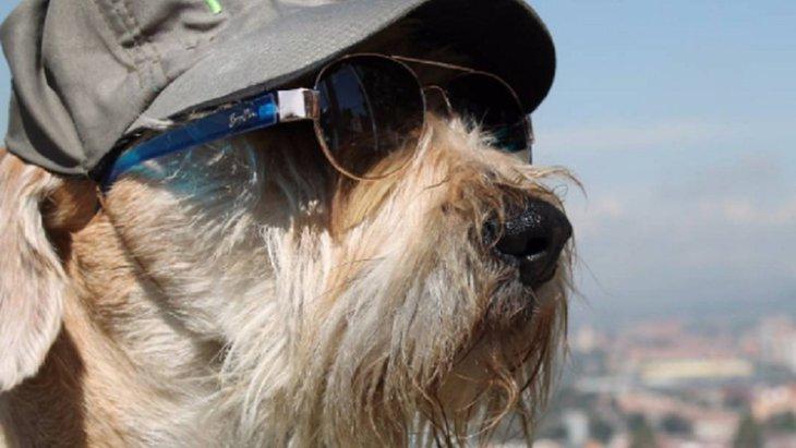街を守るワン!元保護犬のとってもかわいい『犬のおまわりさん』