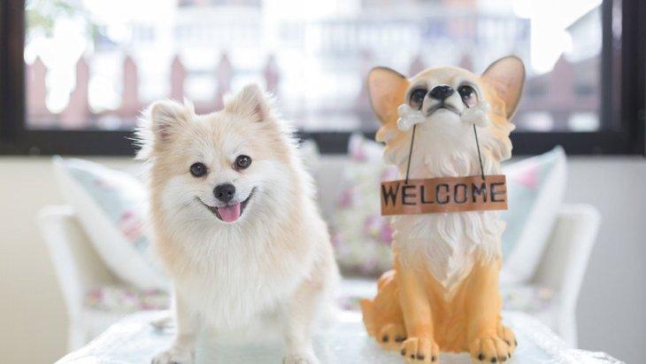 意外と知らない!『犬の置物』を玄関に置くのは絶対NGなんです