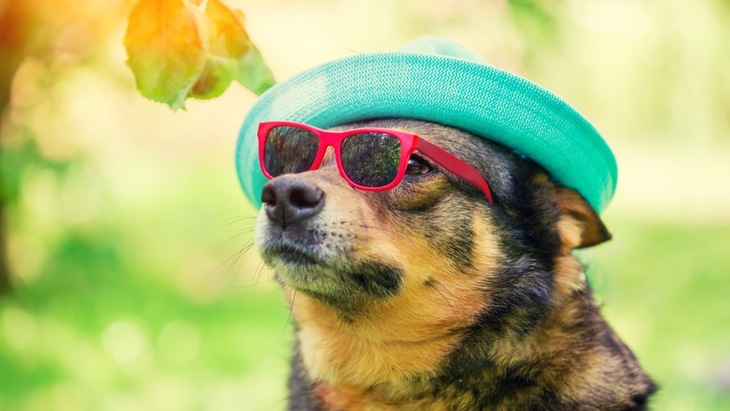 犬の紫外線対策はした方がいいの?
