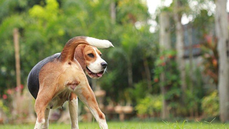 犬から本当に好かれているかを確認する5つの方法