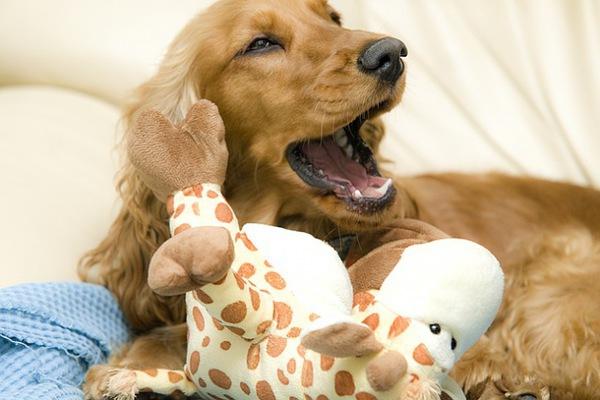 誤解されやすい犬たち~カーミングシグナルを知ろう~