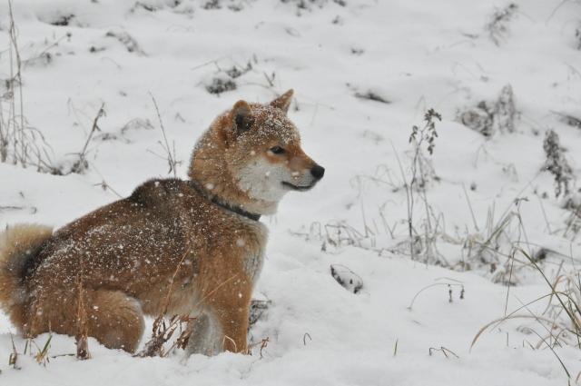 雪の日の犬のお散歩対策について