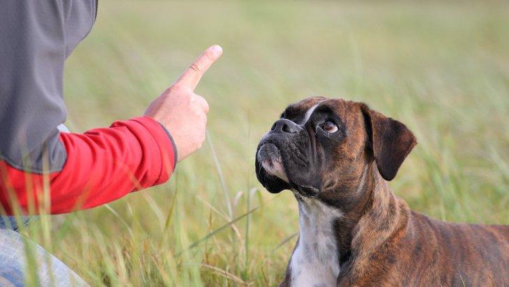 威圧的になってない?犬のしつけに適切な声の大きさとトーンは?