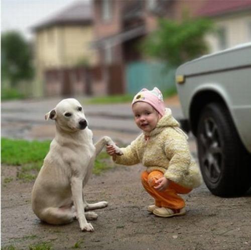 愛犬の利き手をご存じですか?