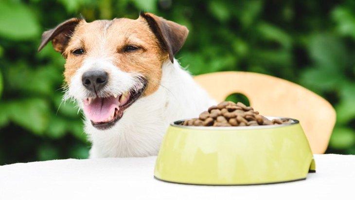 試してみて!犬の食いつきがよくなるご飯の特徴2つ