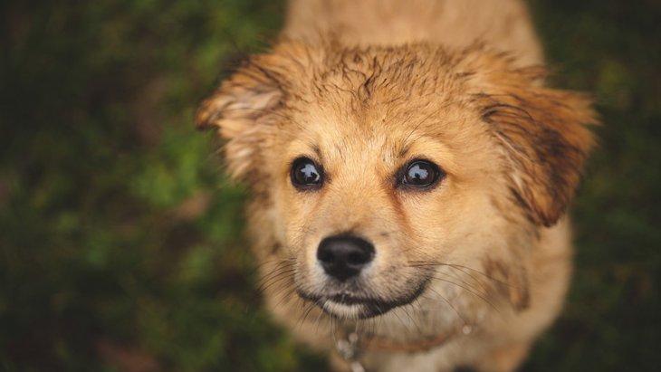 犬が臭くなる5つの原因!対策や予防で獣臭を消そう