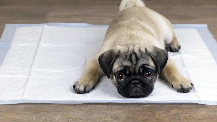 犬の病気がわかる『ウンチの状態』4選!こんなウンチには要注意!