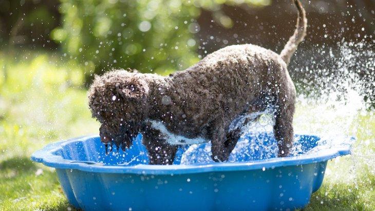 夏を楽しもう!愛犬と『夏にだけできる遊び』5選