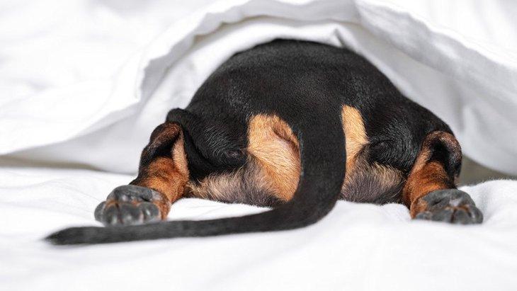 犬の『肛門腺絞り』はなぜ必要なの?しないとどうなるの?考えられる2つの危険性