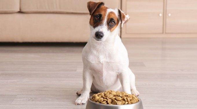 犬に与えるご飯でやってはいけないNG行為4選