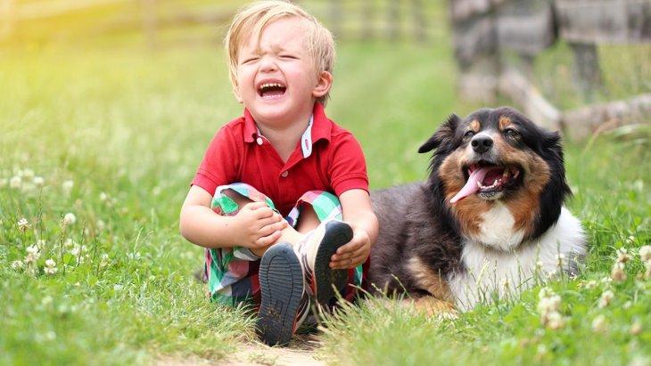 犬も悲しいと思う時がある!人間と同じ「情動」を感じる動物です。