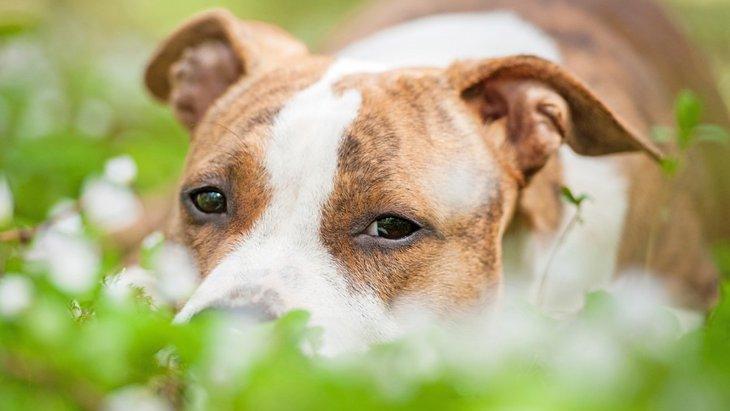 犬が地面に頭をこすりつけるときの心理とは