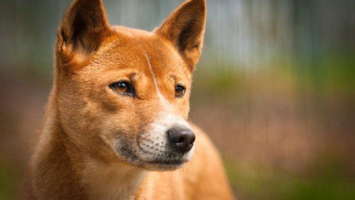 犬が亡くなる時、飼い主から遠ざかろうとする心理とは?