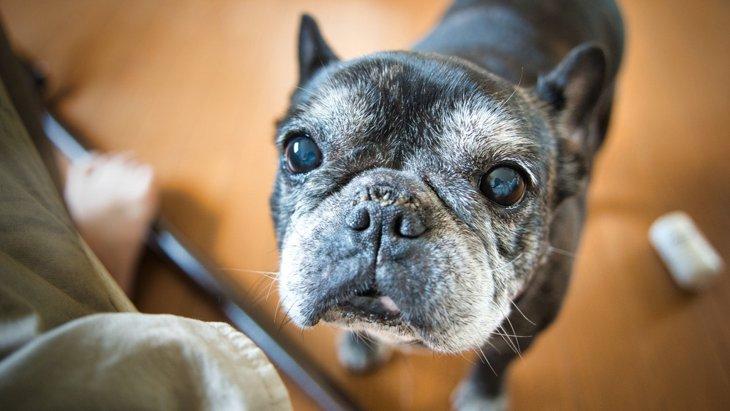 犬が『体をぶつけてくる』心理4選!実は病気になっている可能性も?