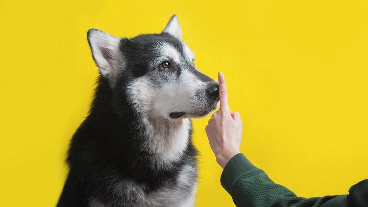 犬の吠えグセは飼い主さんのせいかも!ついやっているNG行動3選
