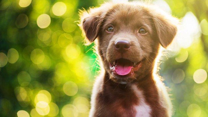 飼い主にとっての「理想の犬」を愛犬に押し付けてはいけない
