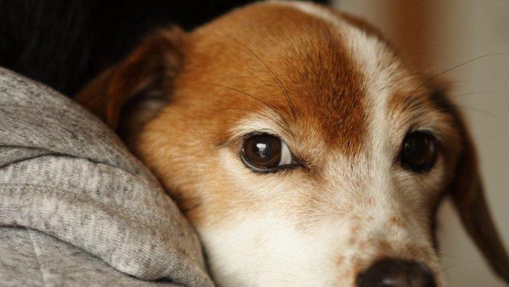 犬が『体調不良』になっている時にする仕草や行動5選