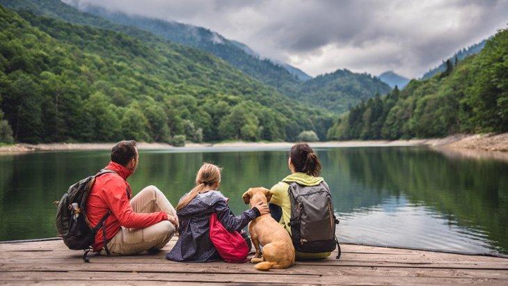工藤静香さんの飼っている犬をリサーチ!犬の種類からキムタクとのエピソードまで紹介!
