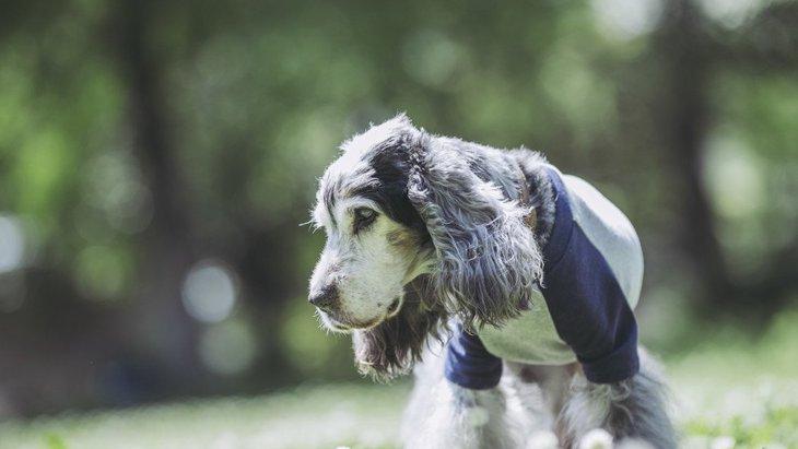 犬の老化のサインとは?見た目で分かるポイントや生活の中で気をつけたいこと