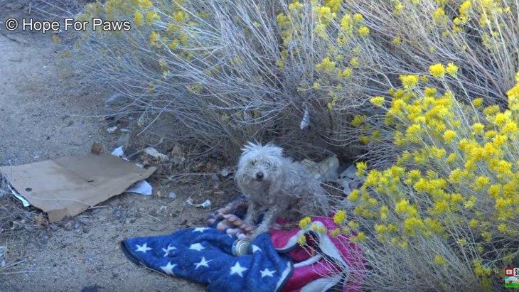足先を失った野良犬は恐怖で牙をむき、それでも諦めない人の愛を知った