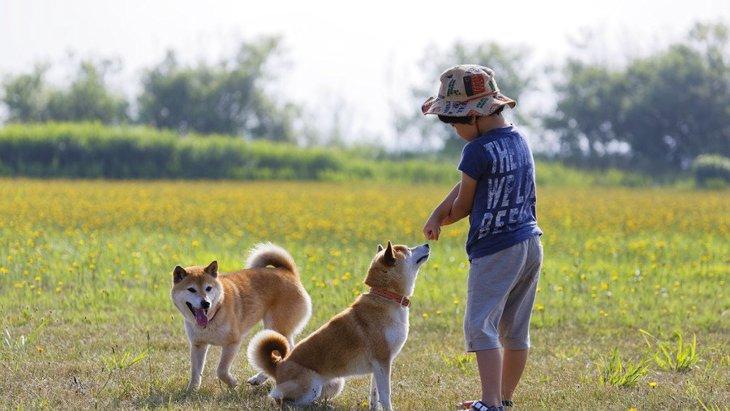 犬は飼い主の子供と同じ行動を取るか?犬の認知についての研究結果