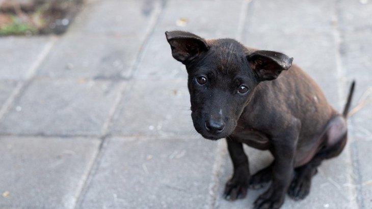 迷子犬を見つけた時にしてはいけないNG行為4選!正しい対処法は?