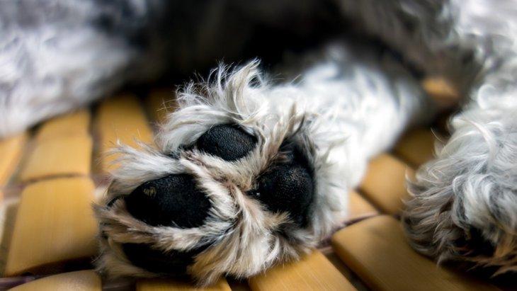 気をつけて!犬の散歩に潜んでいる意外な4つの危険性